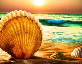 Big shell at the seaside - wonderful summer wallpaper