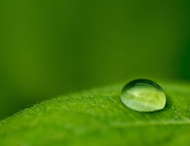 Good morning nature - macro big water drop on a green leaf