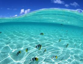 Beautiful fishes in the crystal ocean water