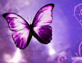Purple butterfly - Vector design