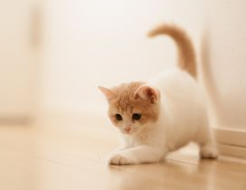 Sweet little cat - cute animal wallpaper