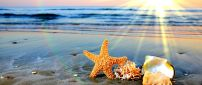 Wonderful starfish and shell at the seaside