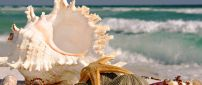 Starfishes and shells on the beach - HD beautiful wallpaper