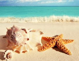 Big shells and starfish on the golden sand - summer holiday