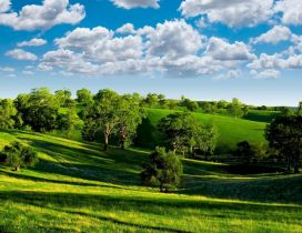 Green nature - trees on the field and beautiful blue sky