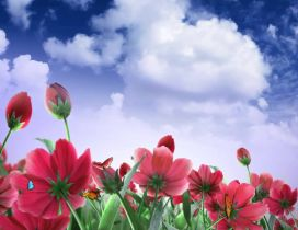 Red and pink flowers - wonderful nature