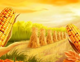 Corn ready to harvest - Golden HD wallpaper