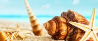 Macro summer wallpaper - big shells on the beach