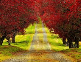 Country road through the beautiful red forest