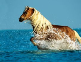 Wonderful horse run in the ocean water - HD wallpaper