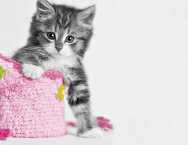 Sweet little cat and a pink bag - HD wallpaper
