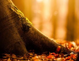 Tree trunk - Macro Autumn season wallpaper