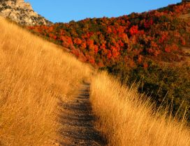 Path through the amber grass - Autumn season