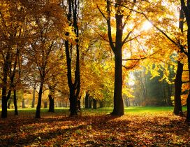 Sunny Autumn day in the park - wonderful moments