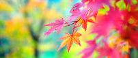 Colorful Autumn season - macro branch of tree
