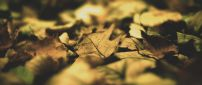 Autumn colors over the carpet of leaves - HD wallpaper