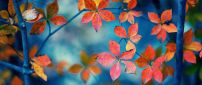 Small Autumn leaves - Blurry wallpaper