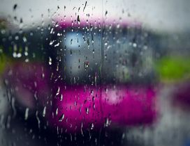 Pink bus in a rainy Autumn day - HD wallpaper