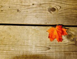 Rusty leaf on a piece of wood - HD wallpaper