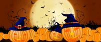Lots of Halloween pumpkins in the garden - HD wallpaper