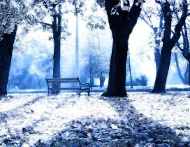 Sunny winter day in the park - White nature wallpaper