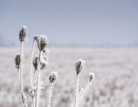 Macro frozen grass - white nature in winter season