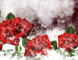 Wonderful red frozen roses - HD winter wallpaper