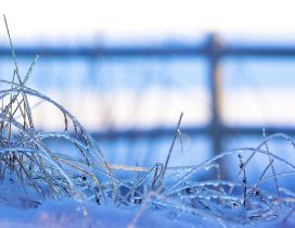 Macro frozen grass - blurry winter season