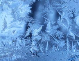 Frozen winter leaves - HD wallpaper