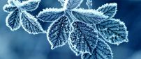 Wonderful frozen leaves - Cold winter season