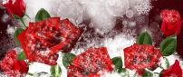 Wonderful red frozen roses - HD winter wallpaper