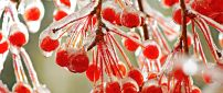 Macro frozen red winter fruits - HD wallpaper