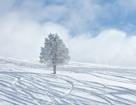 One white tree in the middle of the snow - HD wallpaper