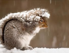 Frozen squirrel in the cold winter day