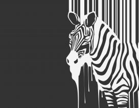 Wild zebra on the wall - Creative wallpaper
