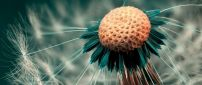 Wonderful macro dandelion puff - HD wallpaper