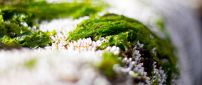 Wonderful green grass in the snow - Macro HD wallpaper