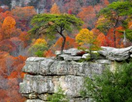 Green tree on a rock - HD wallpaper