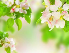 Spring perfume on the blossom trees - HD wallpaper