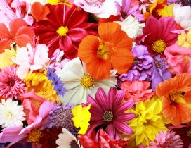 Colorful flower carpet - HD Spring wallpaper