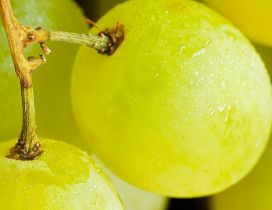 Delicious white grapes - Macro fruits wallpaper