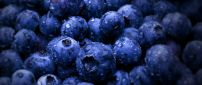 Big water drops on delicious blueberries - Macro wallpaper