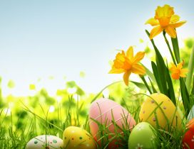 Wonderful yellow spring flower and Easter eggs on the grass