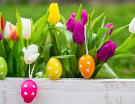 White dots on Easter eggs and colorful tulips -Happy Holiday