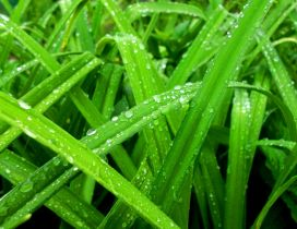 Fresh grass in the spring morning - Macro water drops