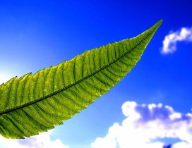 Big green leaf in the light of sun - Blue sky wallpaper