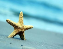 Beautiful starfish in the golden sand - Macro summer holiday