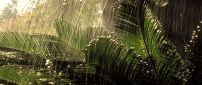 Tropical rain in Ecuador - Big water drops over the plants