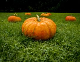 Big pumpkins on the green grass - HD wallpaper