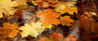 Autumn leaves in the rain water - HD wallpaper